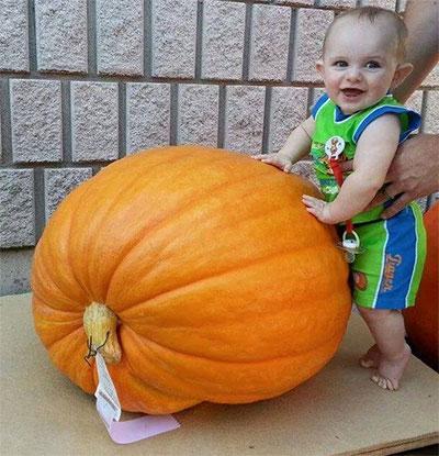 junior-pumpkin
